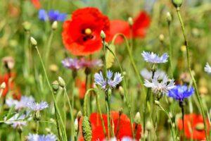Kwietna łąka w ogrodzie
