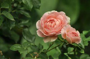 jakie kwiaty do ogrodu, Jakie kwiaty do ogrodu?